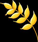 麦穗草植物绿植装饰