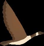 大雁鸟飞鸟鸟类灰色