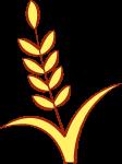 植物麦穗麦子小麦农业