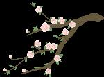 桃花枝花植物绿植树枝