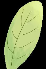 树叶叶子手绘装饰装饰元素