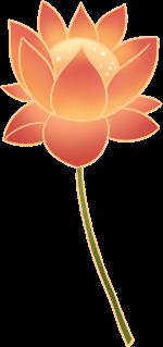 莲花佛莲花花朵植物