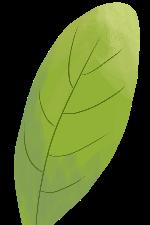 叶子树叶叶片植物绿叶