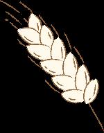 植物麦穗麦子小麦wheat