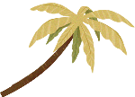 树树木椰子树植物沙滩