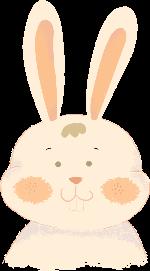 兔子动物动物园养殖场宠物