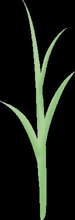 植物树叶绿叶绿植树苗