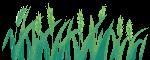 小麦麦穗麦子农业生产