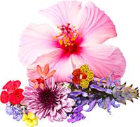 花朵花自然照片ins