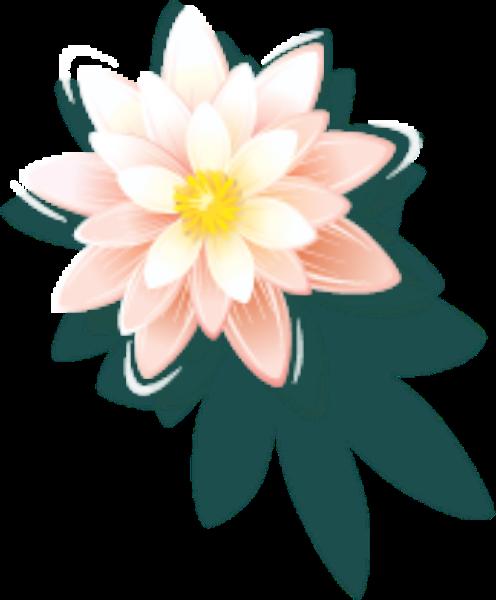 花花朵花卉鲜花荷花