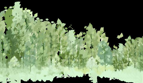树林森林树木树丛丛林