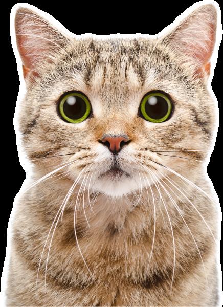 猫咪猫动物cat喵