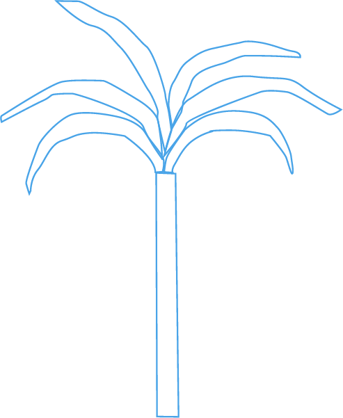 树椰子树树木植物手绘