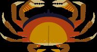 craboceancreaturesea creaturesea animal