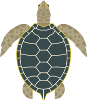turtleoceancreaturesea creaturesea animal