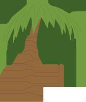 椰子树植物春游