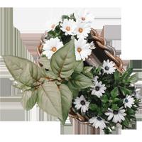 裝飾花朵花自然照片