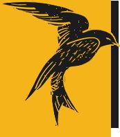 鸟飞鸟燕子动物喜鹊