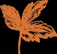 树叶叶片叶子植物素描