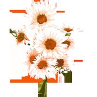 花鮮花花朵花卉植物