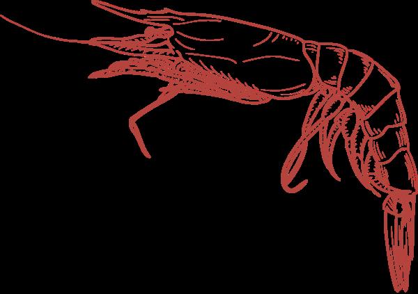 虾动物海鲜河鲜鲜虾