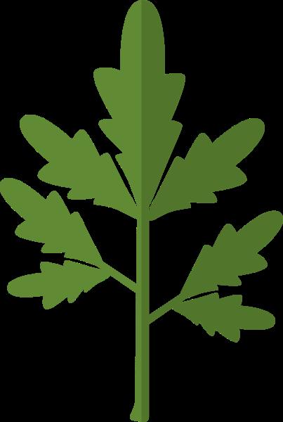 艾叶艾草端午节植物绿植