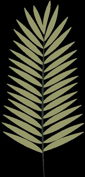 植物绿植叶子绿叶树叶
