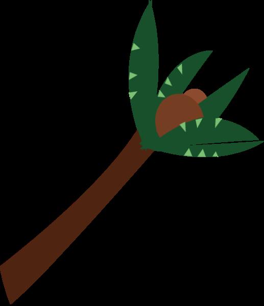 椰子树树叶子植物热带