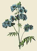 flowerplantvintageitemstuff