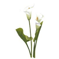 花花朵花卉植物百合