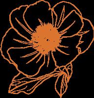 花花朵花卉花形植物