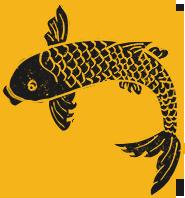 鱼鲤鱼金龙鱼锦鲤动物