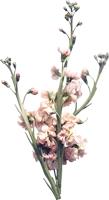 叶子植物花