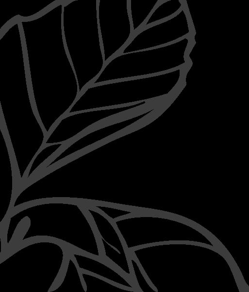 植物绿叶树叶叶子手绘