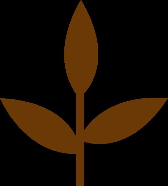 树苗绿叶树叶叶子形状