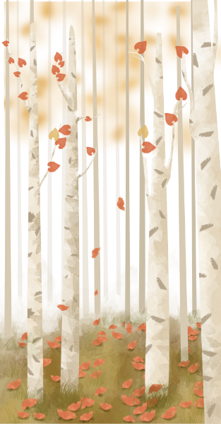 树林树背景秋天森林