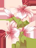 花花朵花卉植物百合花