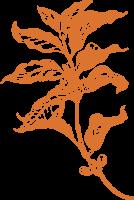 树叶叶子树枝植物素描