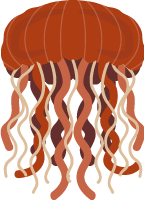 jellyfishoceancreaturesea creaturesea animal