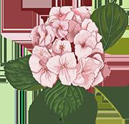 花花朵植物绿叶鲜花