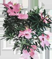 花花朵裝飾自然照片