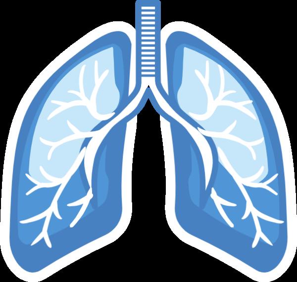 肺肺部內臟器官人體