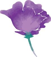花花朵植物紫花自然