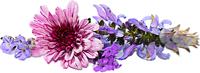 花朵花裝飾自然照片