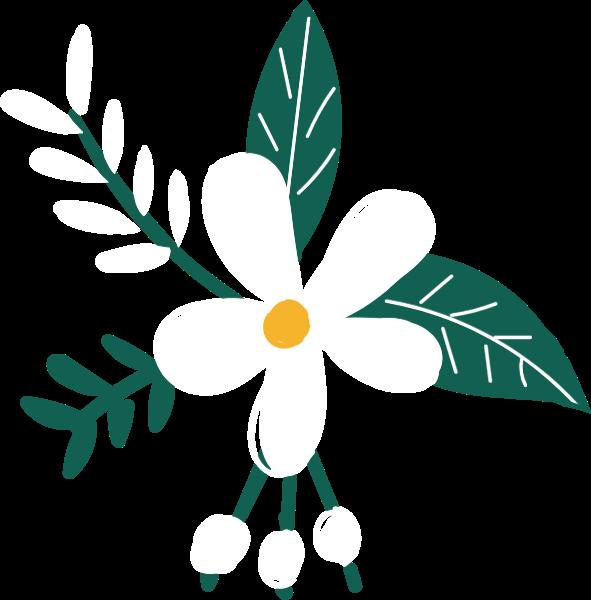 茉莉花花花卉花朵植物