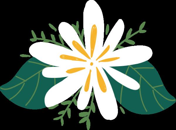 菊花花花卉花朵手绘
