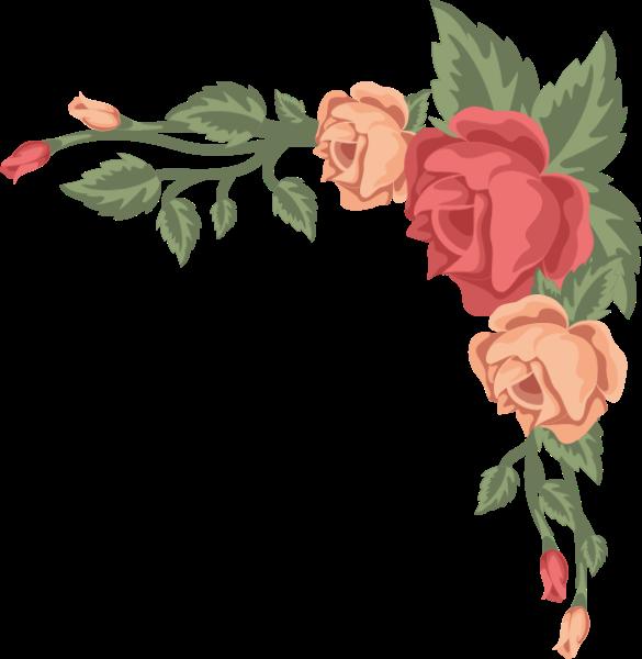 鲜花花卉花花朵美丽