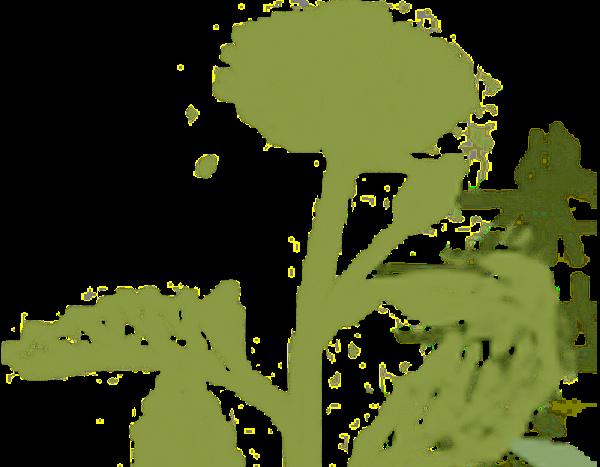 植物水生植物花绿植氧气