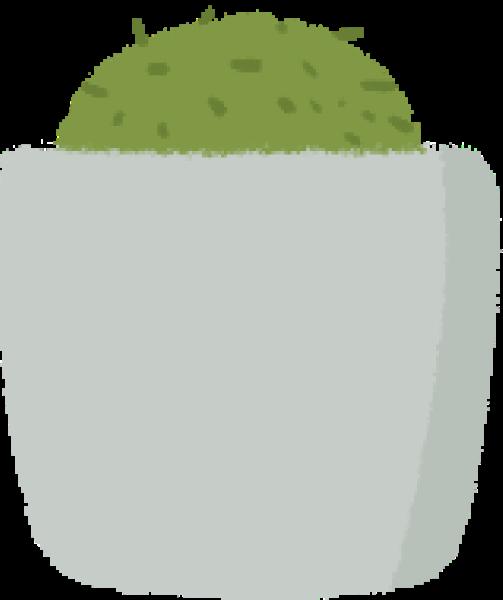 盆栽仙人掌植物仙人球绿植