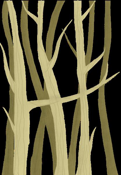 树树丛树干树林森林
